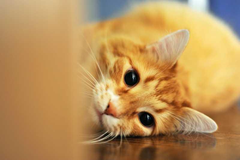 5 самых редких окрасов кошек