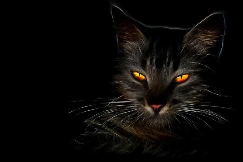 Коты и кошки в славянской мифологии