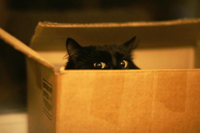 Ученые пояснили любовь котов к обычным картонным коробкам