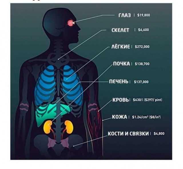 Медицинские шпаргалки, которые подскажут, научат и удивят