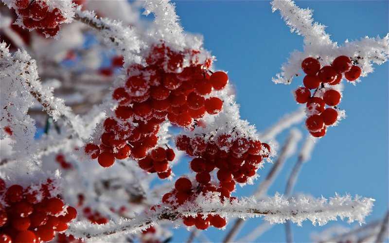 Фотоподборка «Снежная сказка»