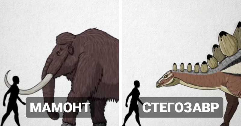 Какого размера были доисторические существа: устрашающие сравнения 20 вымерших животных с человеком
