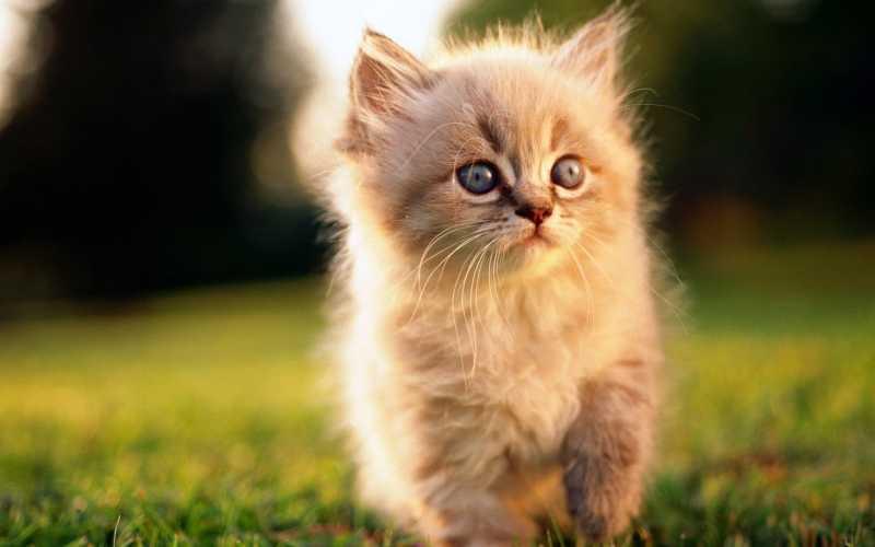 Про котика