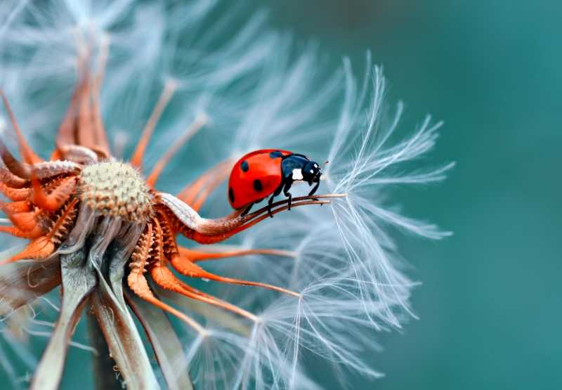 Чудеса макросъемки: 15 завораживающих фото природы