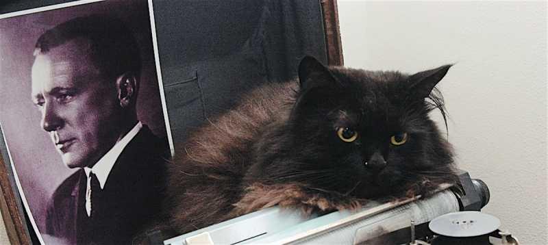 Почему булгаковского кота зовут Бегемот?