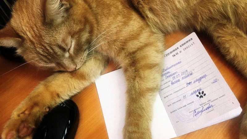Тверская библиотека приняла на работу кота