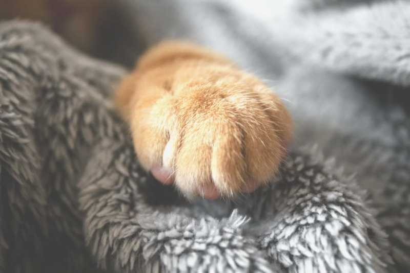 Чем пахнут ноги у Котов?