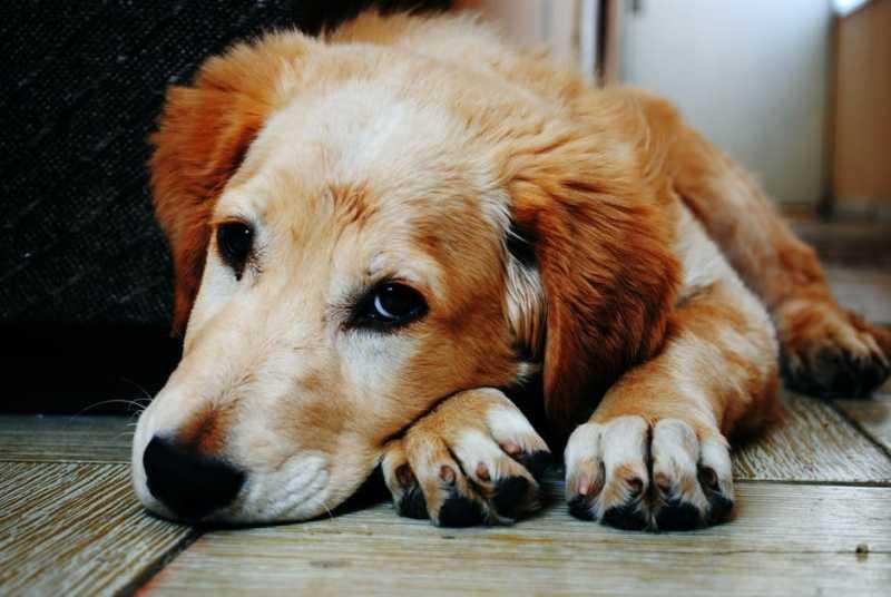 Почему русские называют собак «шариками» и «жучками»
