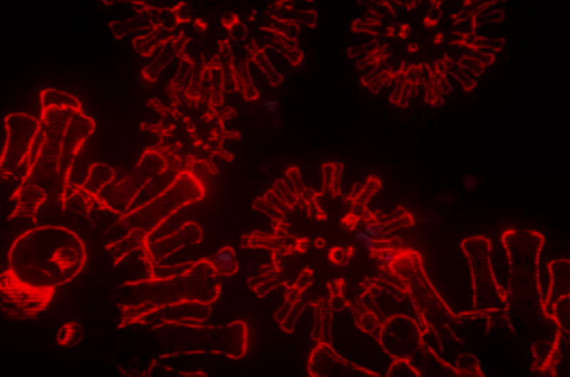 Создана первая игра о коронавирусе