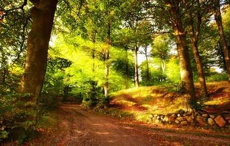 Шумит красавица-дубрава…