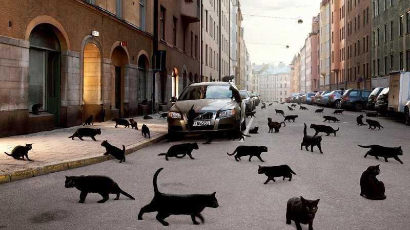 Так ли опасны чёрные кошки?