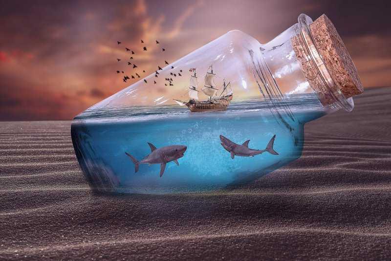 10 самых необычных видов акул