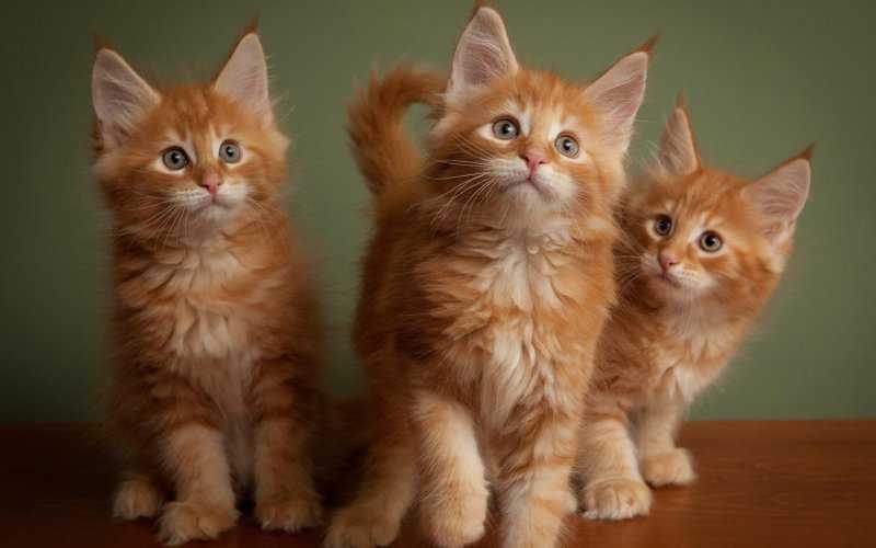 Когда дома котята