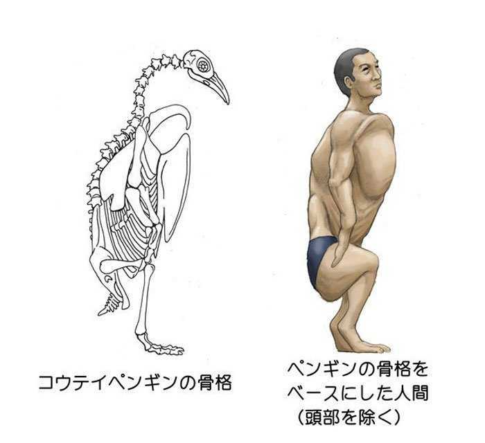 Как бы выглядела анатомия человека со скелетами различных видов животных