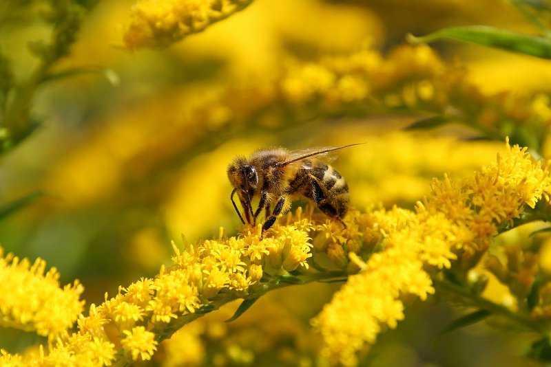 Мёд подарок пчёл