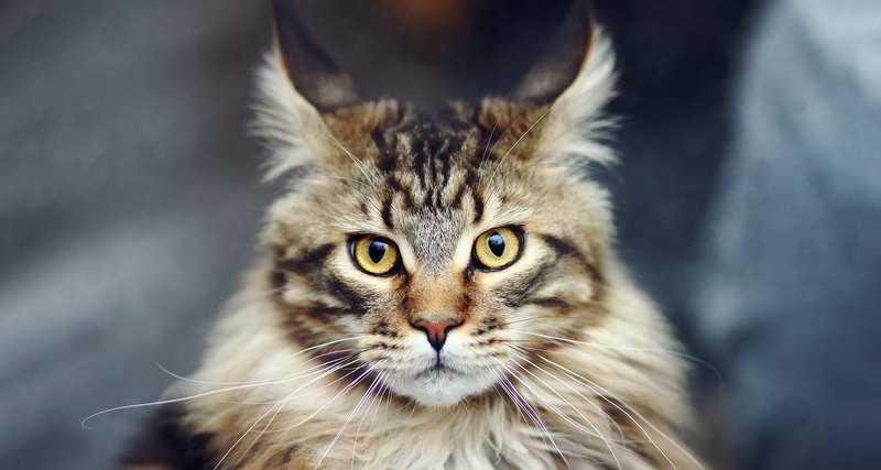 Задача про кота и семь дверей: сможете ли вы перехитрить кошку?