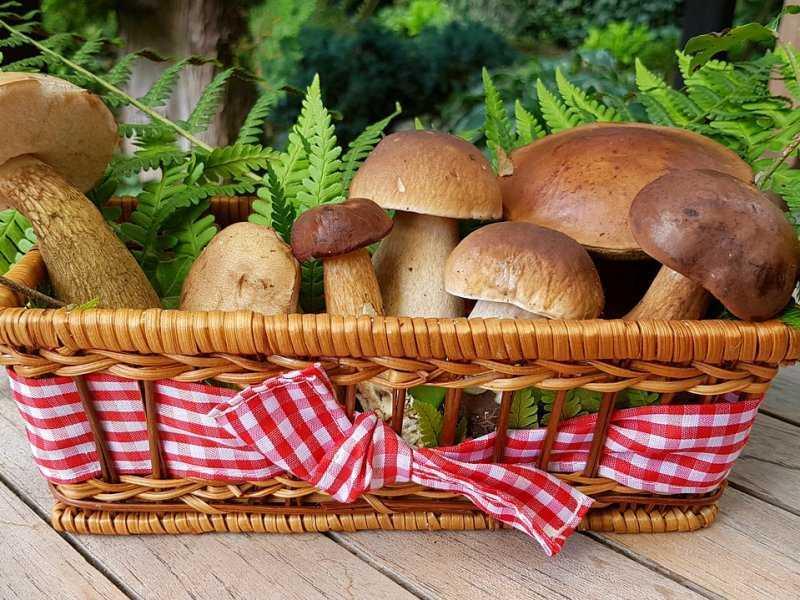 Сбор грибов: техника безопасности. Правило 1