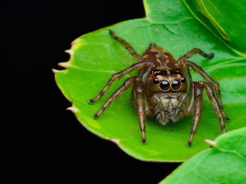 Происхождение слова «арахис»: неочевидная связь с пауком