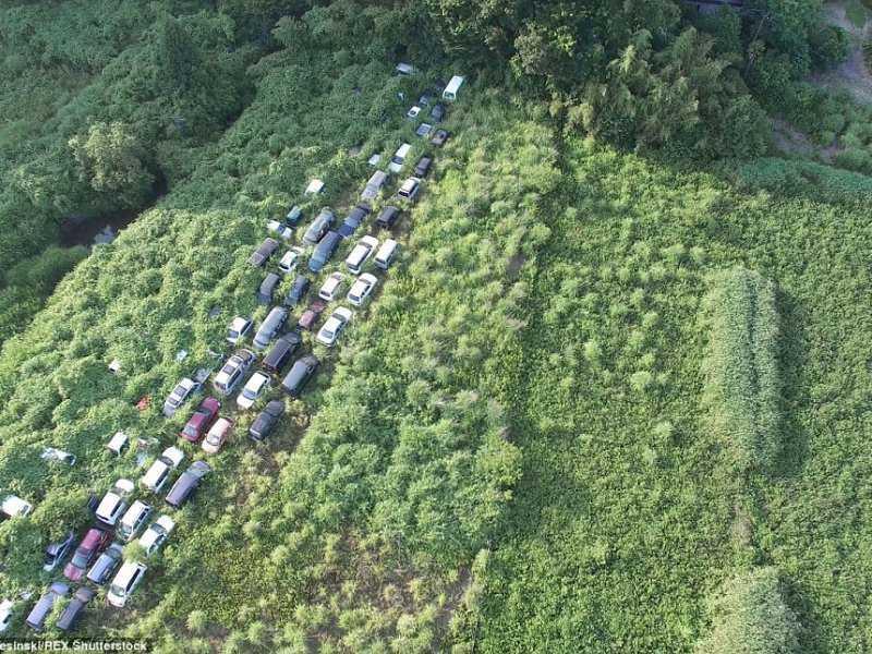 Зона отчуждения Фукусимы: природа возвращает своё
