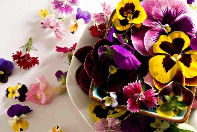 Съедобные цветы: необычно и очень вкусно