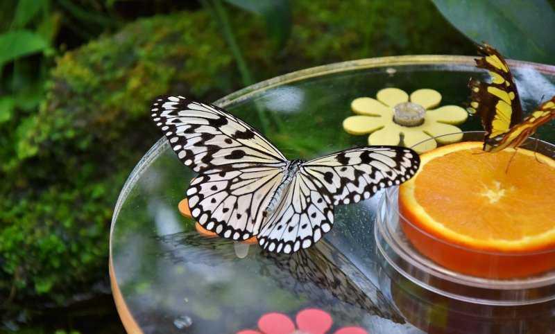 10 самых больших бабочек в мире
