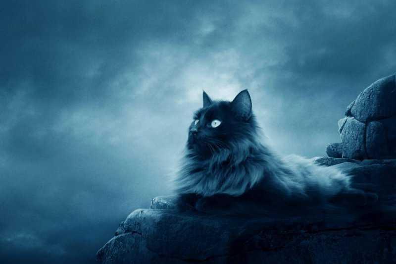 Кошки и мистика: правда или миф?