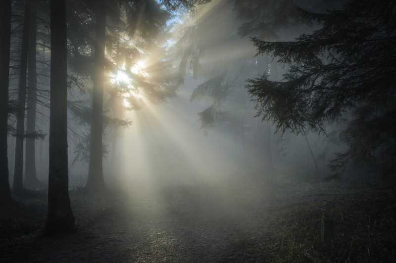 Самые страшные леса планеты