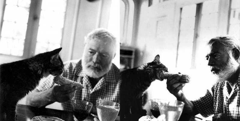 Сколько кошек было у Хемингуэя?