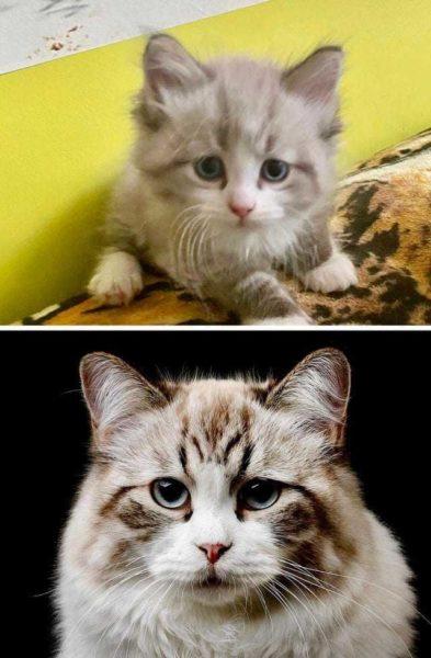 До и после: 20 котиков, которые выросли