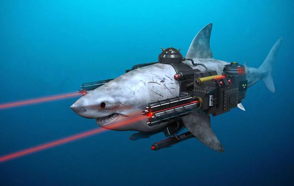 Акулы-камикадзе и другие зоопроекты Пентагона