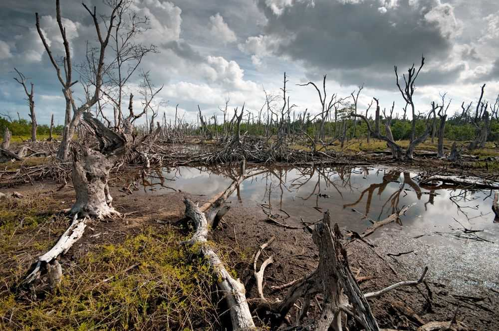 2 - Леса-призраки – печальная реальность современного мира