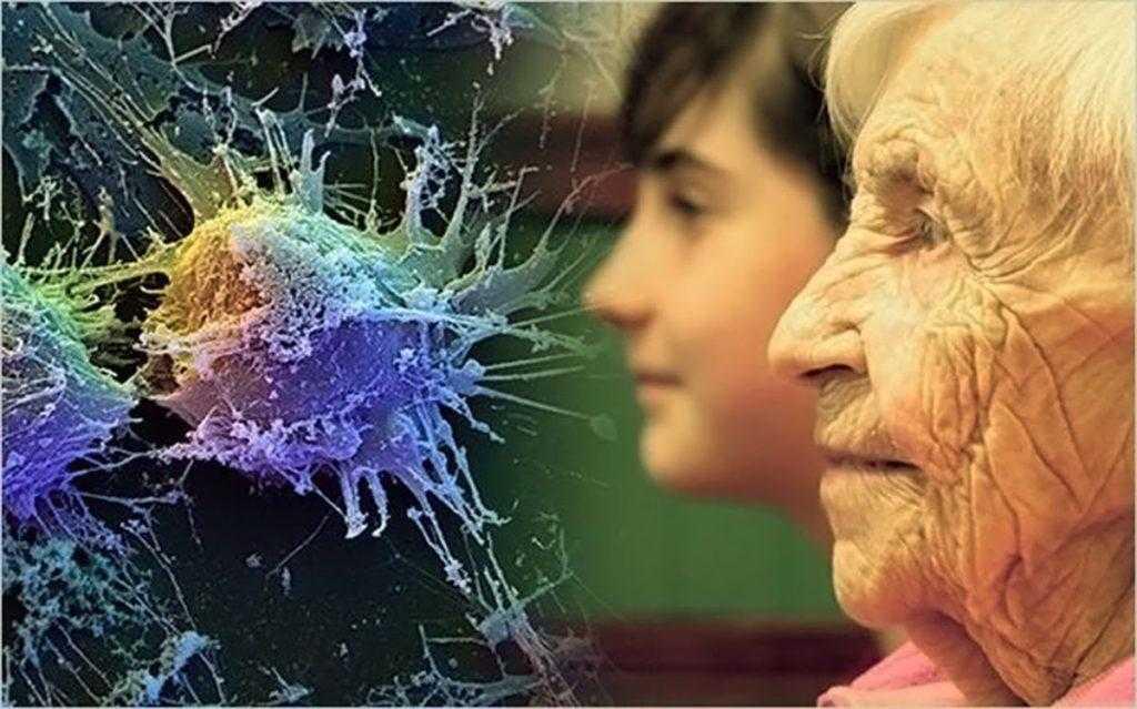 Японские ученые нашли способ замедлить старение