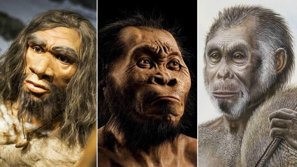 Эволюция человеческого мозга