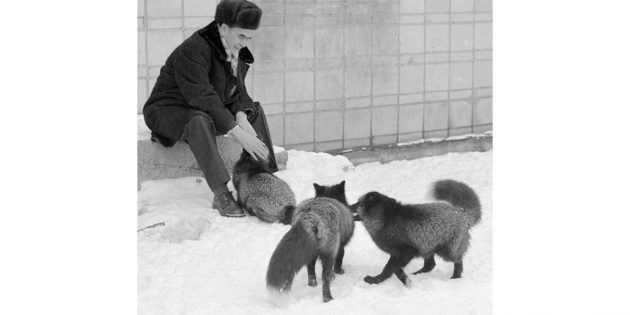 dmitrij2 - Книга дня: «Как приручить лису (и превратить в собаку)» – эксперимент по созданию идеального питомца