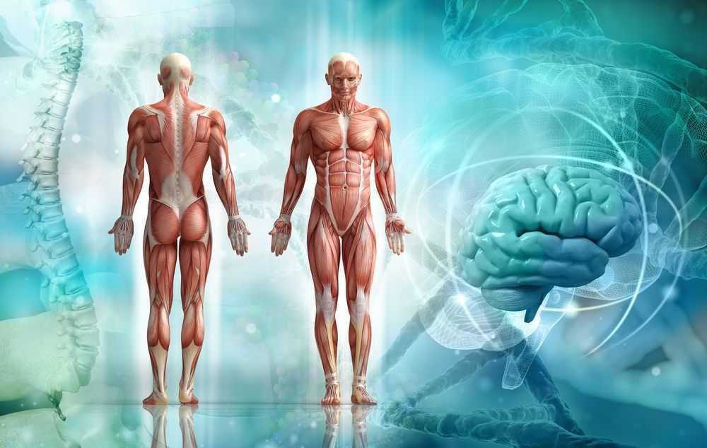 Эволюция продолжается. Как человеческое тело изменилось за 100 лет