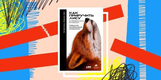 Книга дня: «Как приручить лису (и превратить в собаку)» – эксперимент по созданию идеального питомца