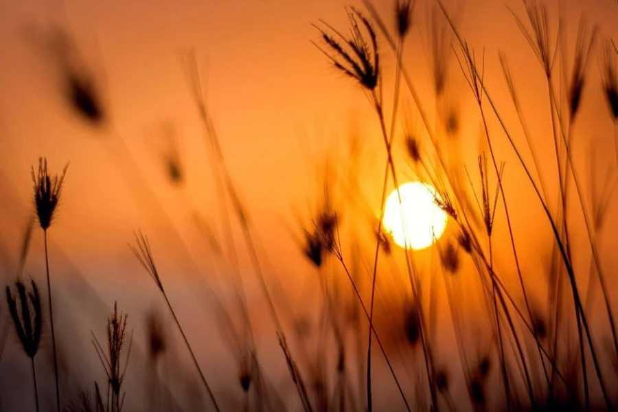 Скоро самый длинный день в 2021 году: летнее солнцестояние 21 июня