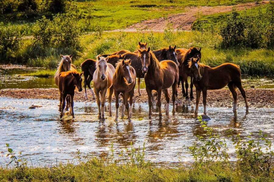 Марусины лошадки