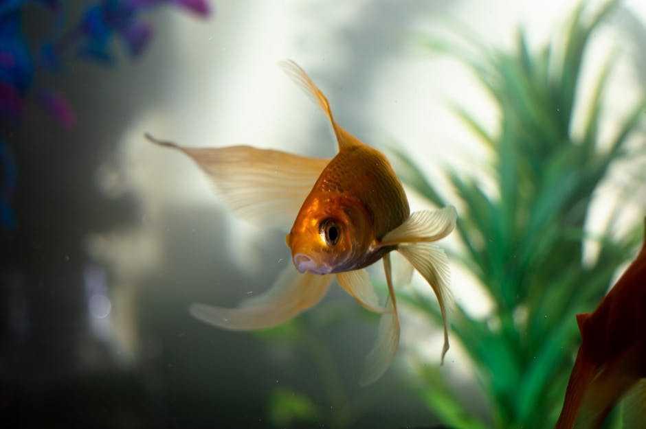 В США выброшенные в озеро золотые рыбки вырастают до гигантских размеров и вредят экосистеме