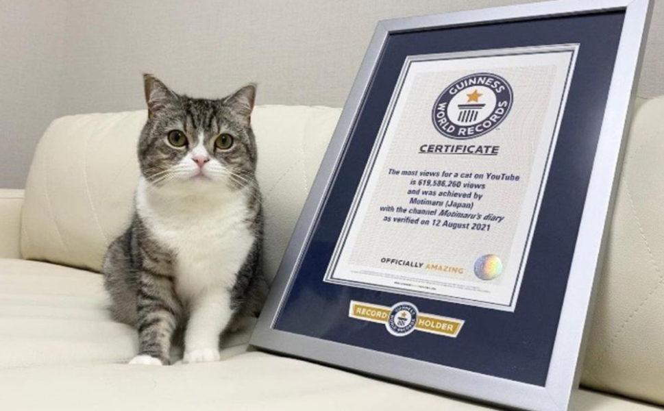 Кот из Японии попал в Книгу рекордов Гиннесса — он самый популярный на ютубе