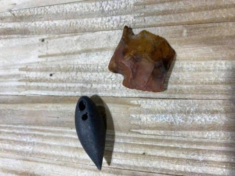 В желудке огромного аллигатора из Миссисипи нашли артефакт возрастом шесть тысяч лет